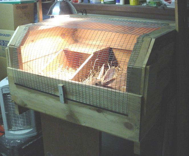 Flemish Giant Rabbit Cage   [#] Lunawsome - photo#13